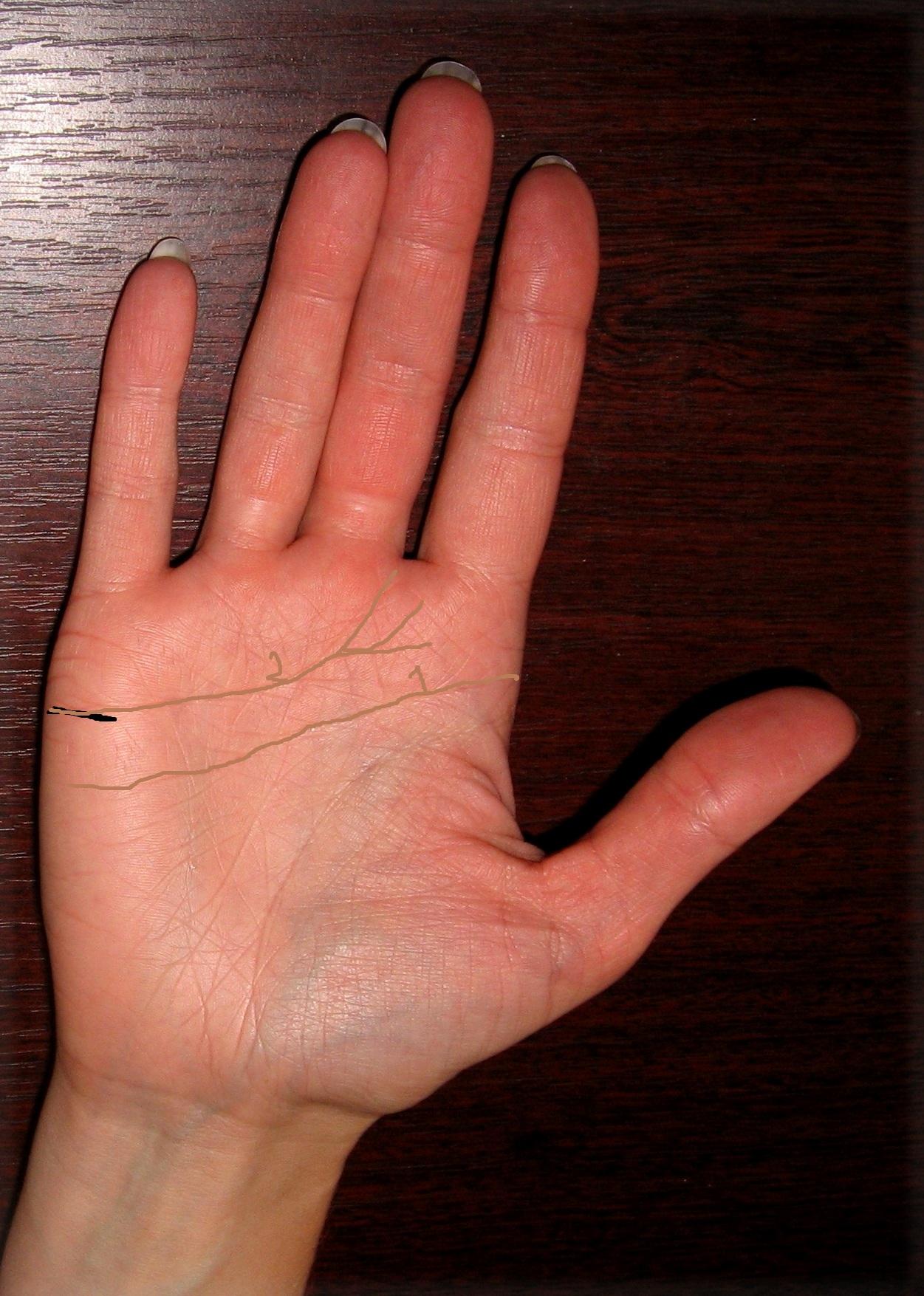 Узнать свою профессию руке 23